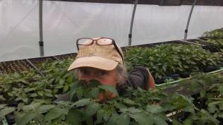 Tomato seedling hideout